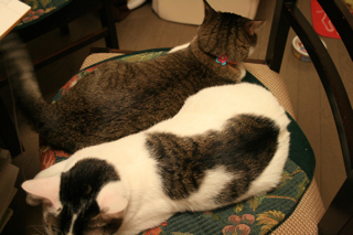 凛、アニの椅子にすわる