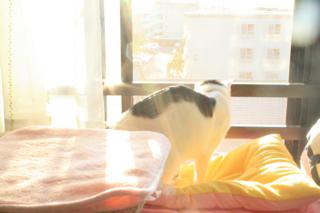アニ、朝陽