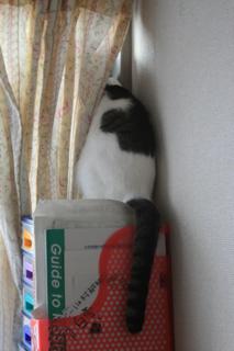 アニ、ねえねの窓