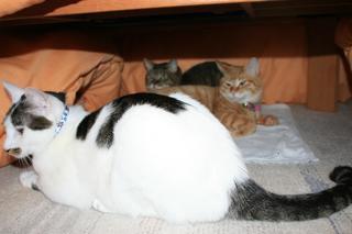 落ちついた猫団子。