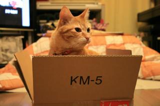 箱、小梅。