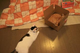 箱、アニが。