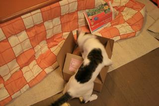 箱、アニが。02