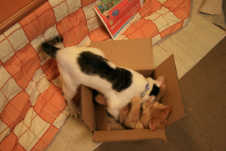 箱、アニが。03