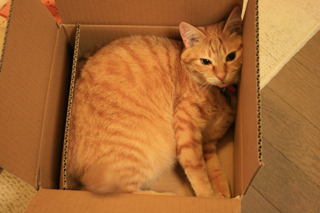 箱、小梅。02