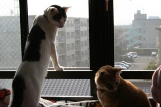 小梅とアニ、会話する。