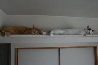 小梅&アニ