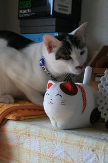 アニと張りボテ猫