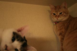 小梅とアニ03