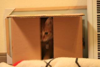 小梅、さんざん箱で