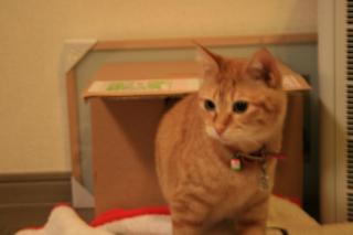 小梅、遊んだ後は子猫の顔