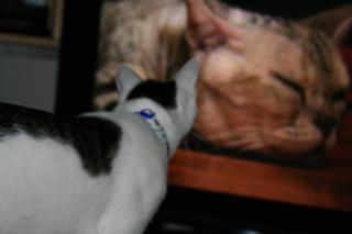 TVに飛びかかるアニ