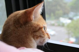 外を見つめる小梅