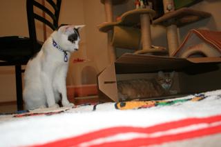 箱、アニと小梅