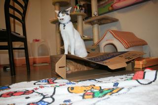 箱、アニと小梅3