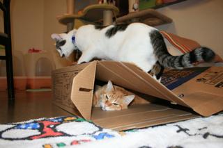 箱、アニと小梅5