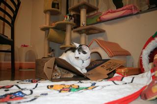 箱、アニと小梅6