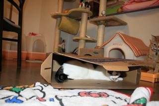 箱、アニと小梅9
