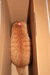 箱、とりあえず小梅