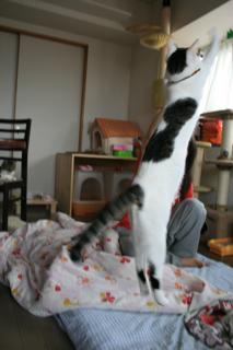 アニ、ジャンプ