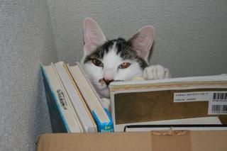 アニ、本棚。