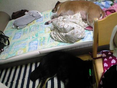 ねぇねのお部屋は僕らの寝床!