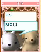 30-pet_shima.jpg