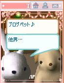 36-pet_shima2.jpg