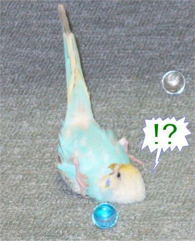 5choko-3.jpg