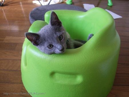 cat_20090131105643.jpg