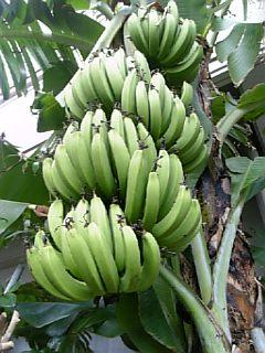 banana5