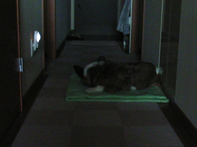 涼しい廊下でお休みで~す!