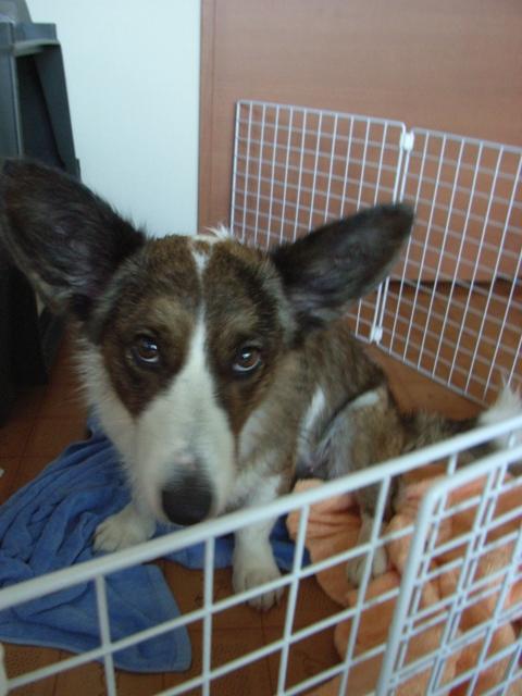 洗犬後、ご不満のご様子のりんたん。