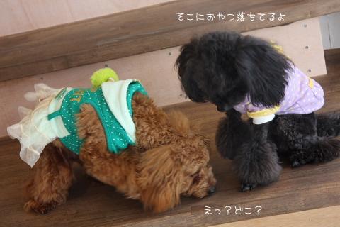 azuki&curl
