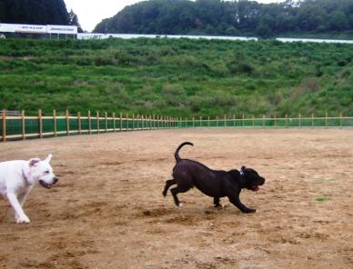 2008_0608華0420