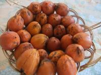 荒川の熟し柿
