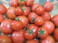 岩崎さんちのトマト