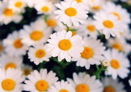 aお花いっぱい