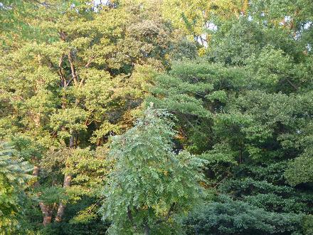 神社の森p