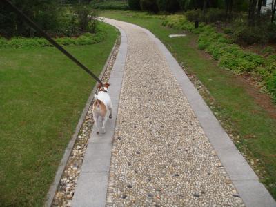 Boomer walk-walk