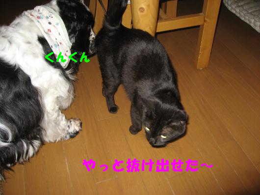 8_20090517225030.jpg