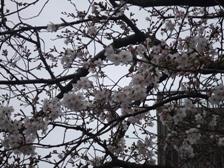 バイオパーク桜 009