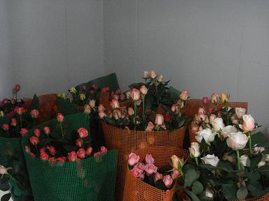 2008-06-26.jpg