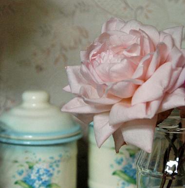枯れそうな薔薇