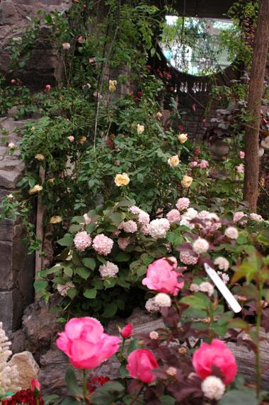 国際バラその2.5