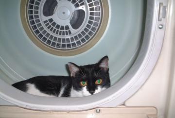 乾燥機の中