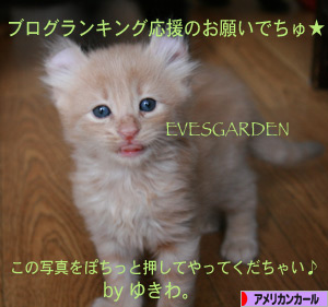 にほんブログ村 猫ブログ アメリカンカールへ