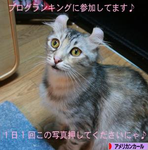 081101pochi.jpg