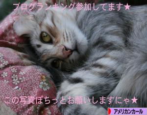 081106pochi.jpg