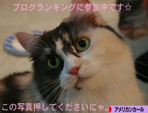 081112pochi.jpg